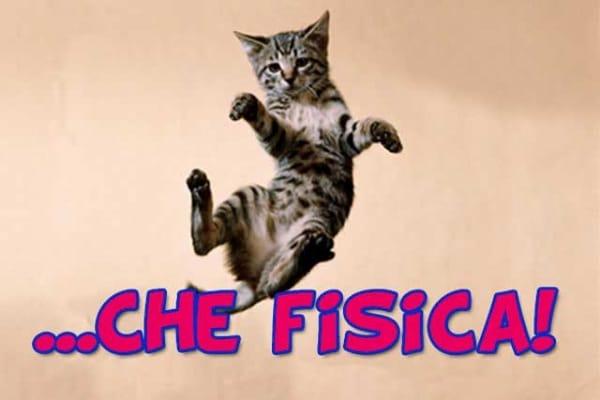 Fisica | Perché il gatto cade sempre sulle zampe?