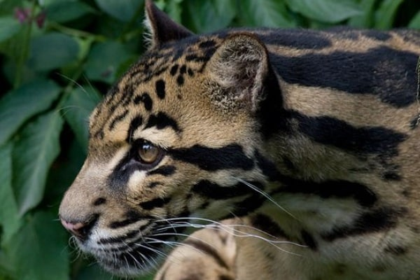 Curiosità animali: 10 mammiferi scoperti negli ultimi 10 anni