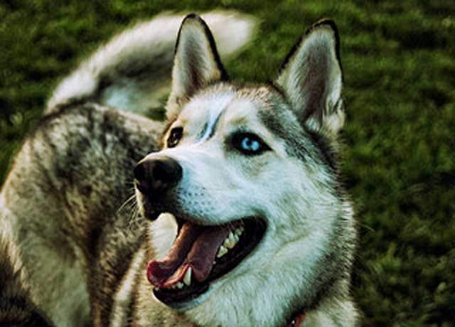 Curiosità animali | I dieci occhi più strani del mondo animale
