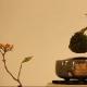 Bonsai volanti | Una novità dal Giappone / Image 4