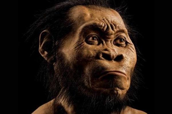 Una nuova specie umana? L'Homo naledi scoperto in Sudafrica