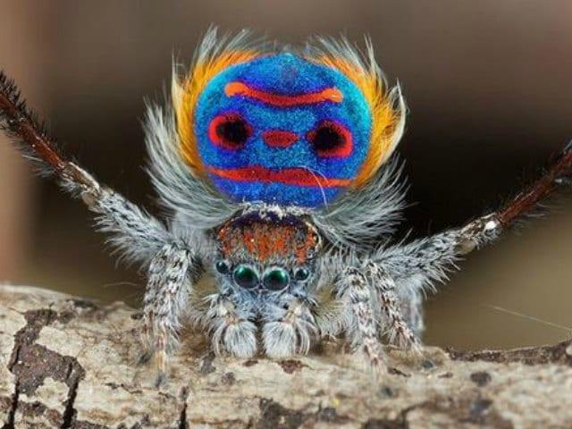 5 specie di ragni che (forse) non conosci!