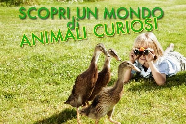 Animali curiosi: scopri delle strane specie mai viste prima!