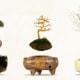 Bonsai volanti | Una novità dal Giappone / Image 5