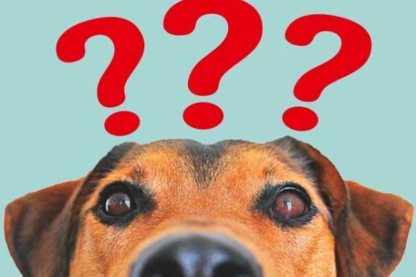 Strano ma vero | 5 curiosità sui cani