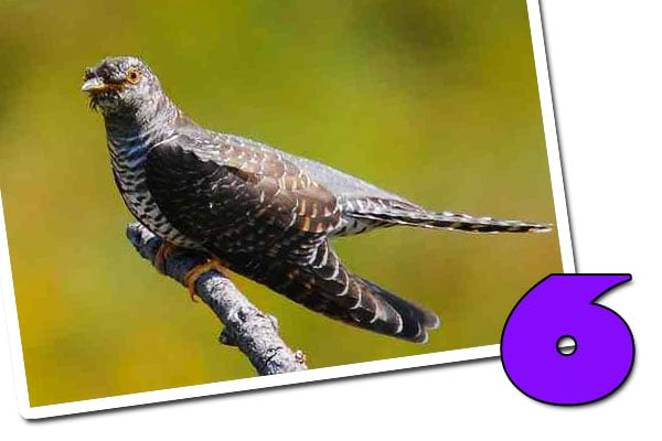 tecniche di difesa degli uccelli