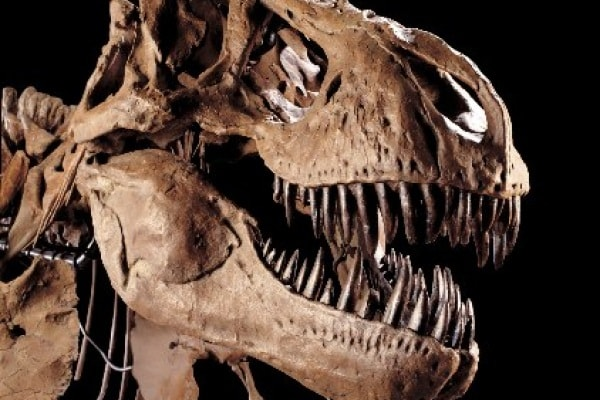Quiz: 20 domande su dinosauri, preistoria & C. Quanto ne sai?