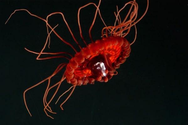 Meduse | Cosa sono, le cose che devi sapere e le curiosità