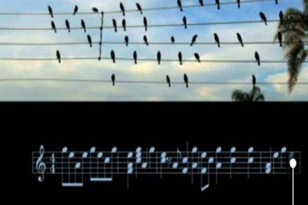 Video sorprendente: gli uccelli sui cavi compongono musica?