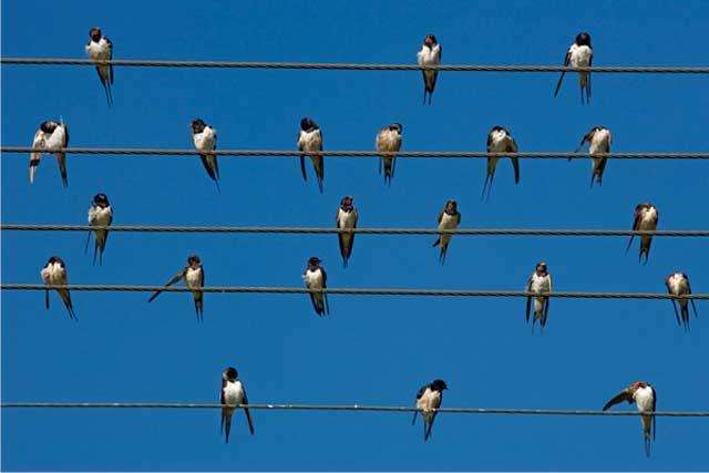LE SALON DE MUSIQUE  - Page 22 Uccelli-sui-cavi-elettrici