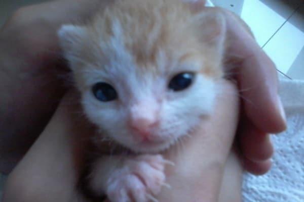Storia di Ulisse, un gattino da salvare
