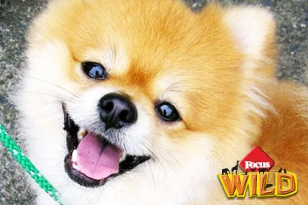 Curiosità animali: anche i cani ridono | Focus Wild
