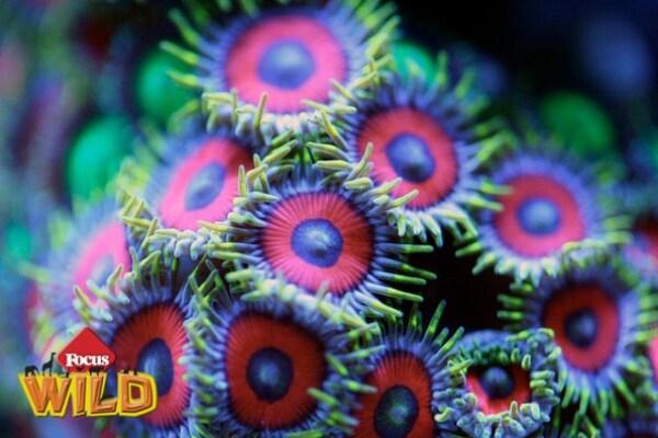 Curiosità animali: la magia dei coralli | Focus Wild