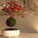 Bonsai volanti | Una novità dal Giappone / Image 6
