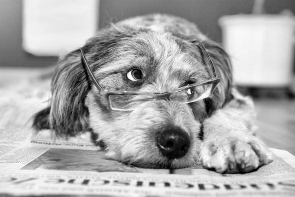 Cani cervelloni | Il migliore amico dell'uomo impara molto in fretta