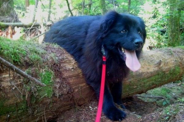 Cani incastrati | Le foto più spassose di cani nei guai!