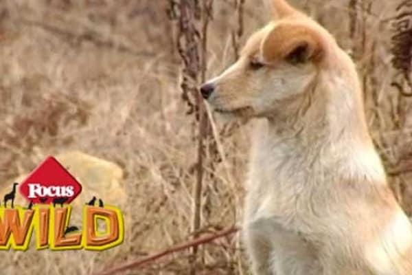 In Cina un cane veglia sulla tomba del suo padrone Lao Pan