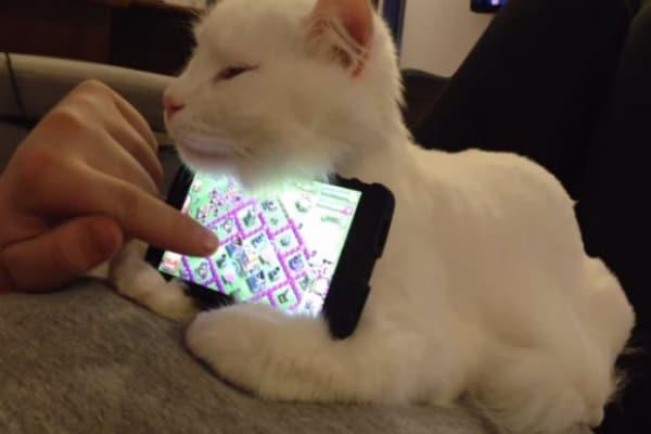 Il gatto tiene fermo il telefonino mentre il suo padrone gioca