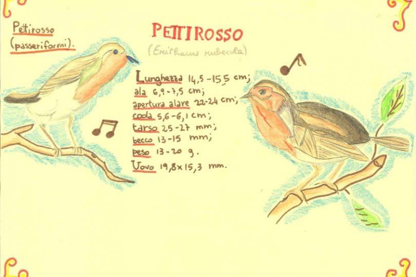 Disegna il tuo birdy – I vostri birdy