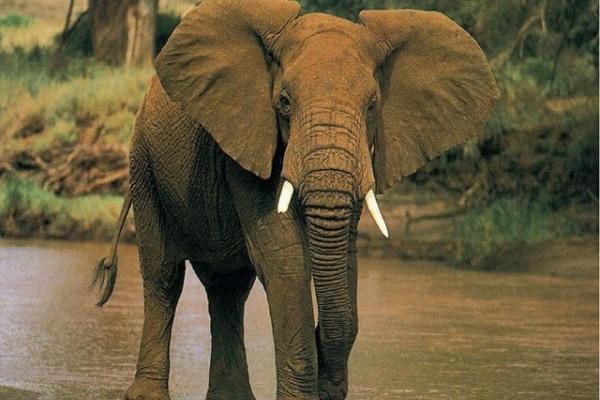 Elefante buono salva una bambina!