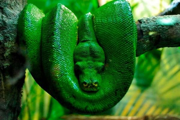 Lo sapevi che | Il serpente è tutto coda o è tutto collo?