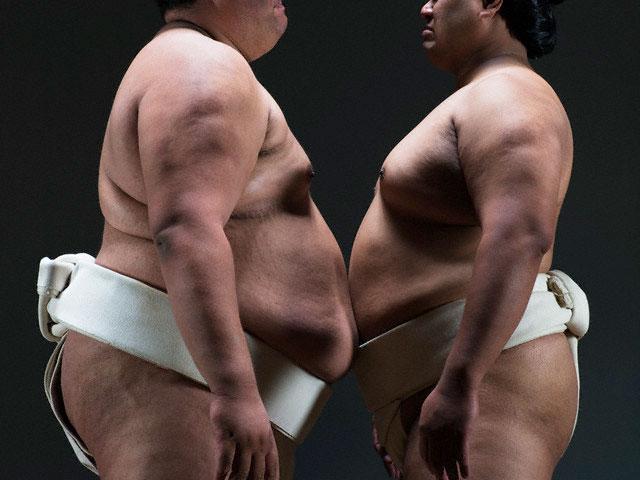 Perché i lottatori di Sumo sono grassi?