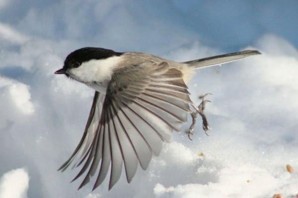 Fai da te | Come fare una mangiatoia per gli uccelli