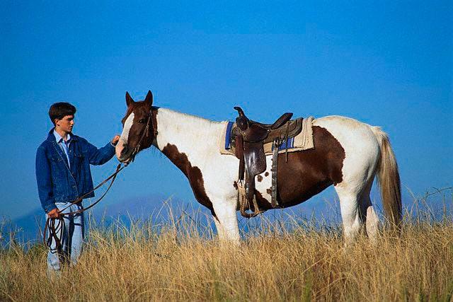 Il cavallo, un vecchio amico dell'uomo