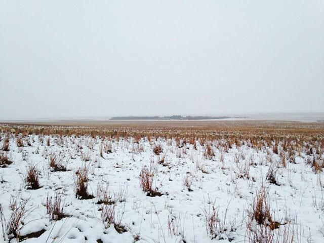 In questa foto ci sono 550 pecore. Le vedi?