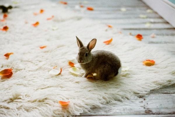 Coniglietti pelosi: ecco i dieci più teneri. Guarda le foto!