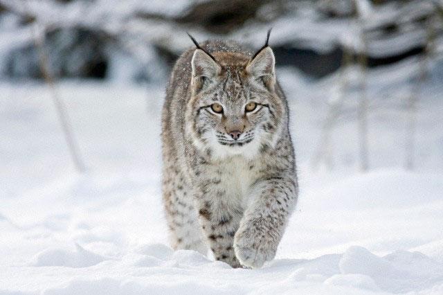Guarda queste superbe facce da felino!