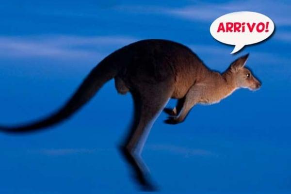 Animali | Perché i canguri saltano?
