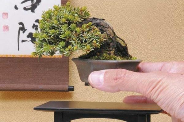 Giappone | L'arte del bonsai e tanto altro