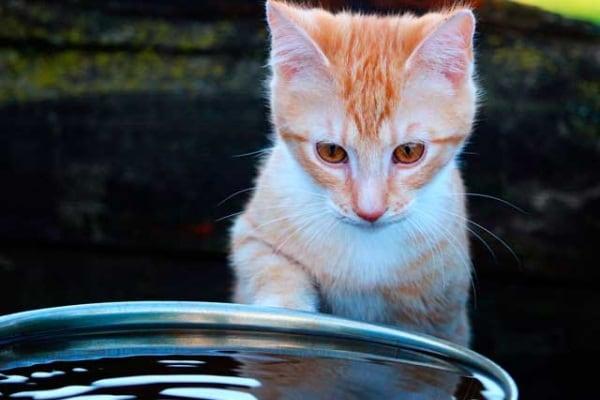 Lo sapevi che | I gatti possono nuotare?