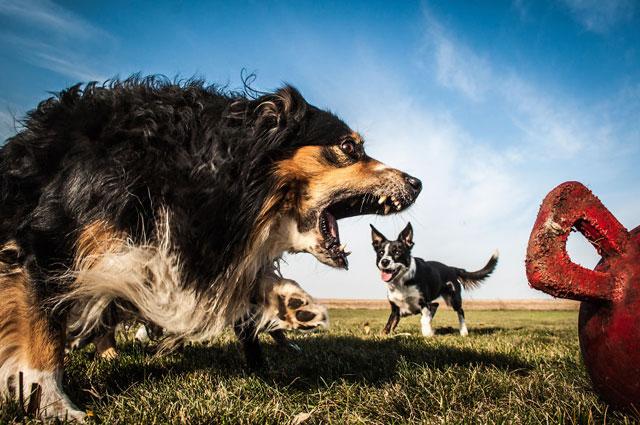 Illusioni ottiche | L'invasione dei cani giganti