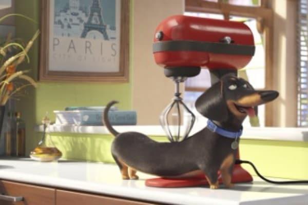 [Trailer] Dagli autori di Minions ecco Pets, il divertente film sugli animali domestici