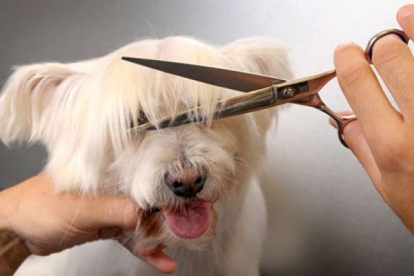 Non tosate i vostri amici cani (e gatti)