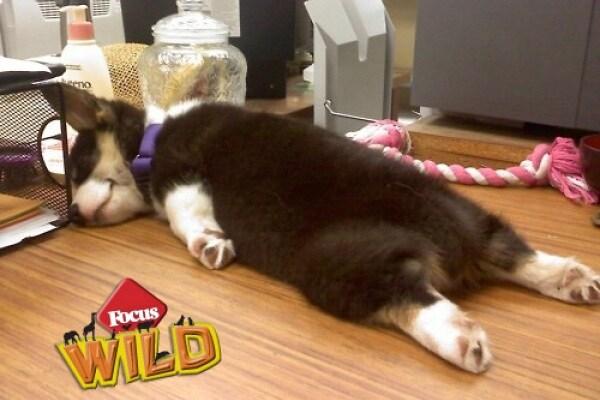 Curiosità animali: anche gli animali fanno planking! | Focus Wild