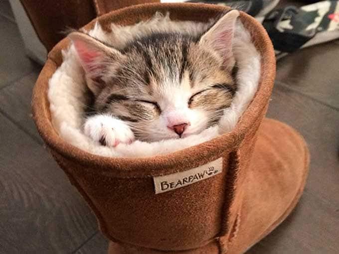 Foto buffe sul sonno degli animali. E scopri perché dormono così