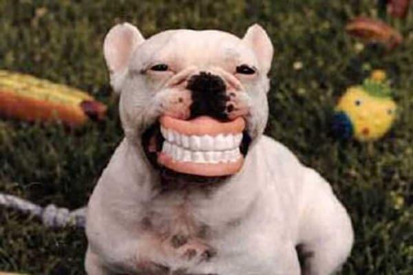 Dentifricio e spazzolino | Chi li ha inventati?