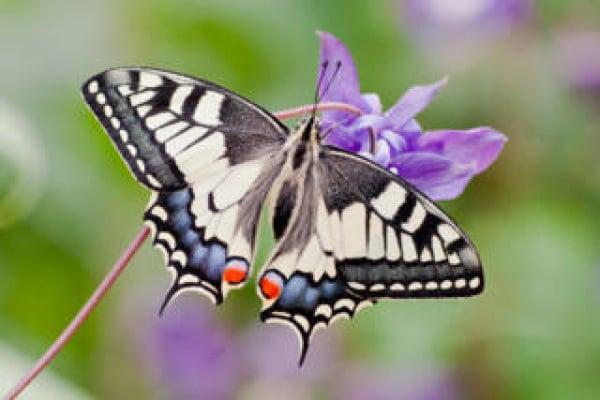 Junior reporter, perché le farfalle hanno le ali colorate.