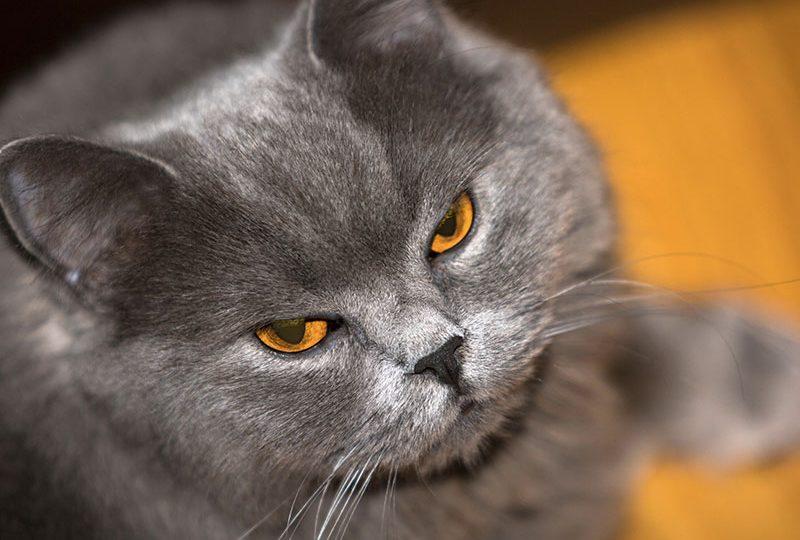 """Grumpy cat è in buona compagnia: gli altri animali """"imbronciati"""""""