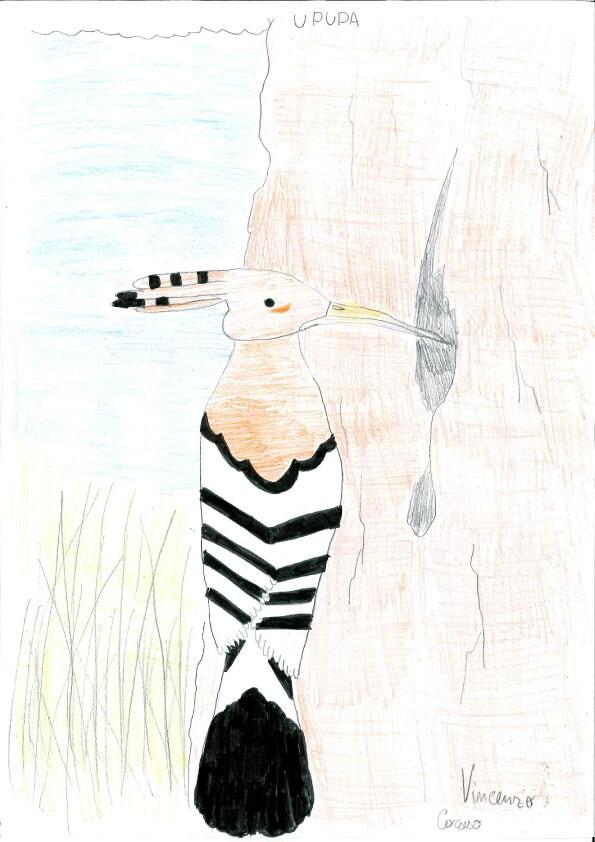 Disegna il tuo birdy i vostri birdy focus junior - Disegna il tuo giardino ...