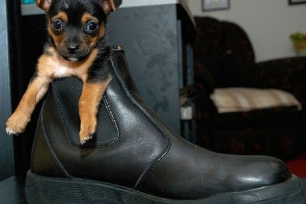 Curiosità animali: cuccioli da salvare!