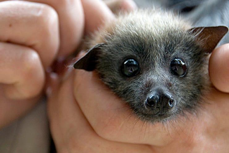 Pipistrelli: 6 curiosità da non perdere