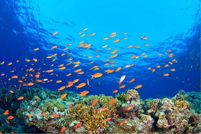 10 curiosità sulla Grande barriera corallina