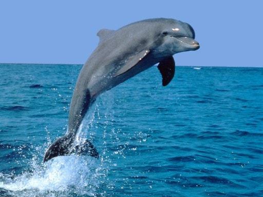 Delfini e balene filmati da un drone