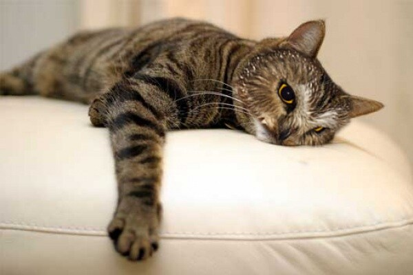 Fotomontaggi: gatti… gufi!