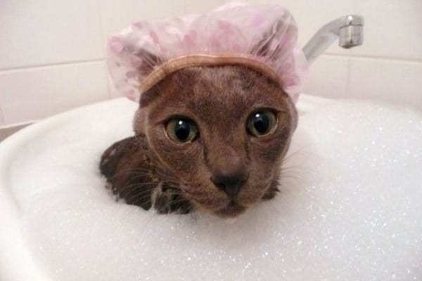 Curiosità animali: bellezze al bagno!
