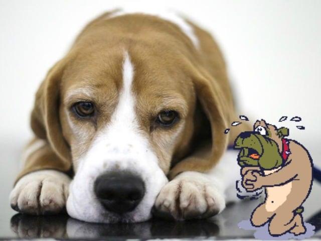 Questi animali tristi aspettano di essere consolati da voi